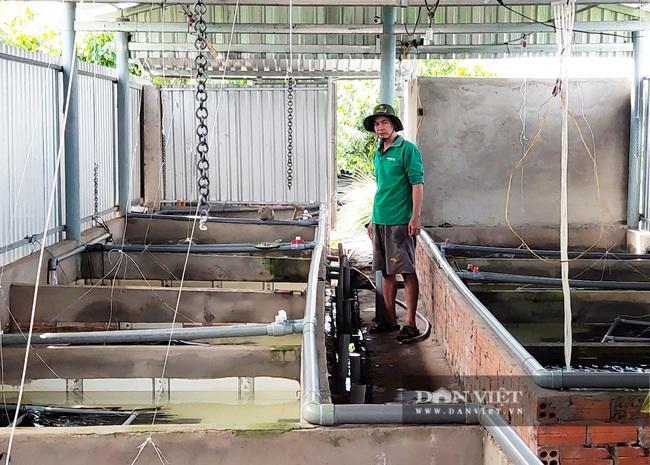 Sóc Trăng: Tận dụng bể nuôi ếch nuôi lươn không bùn, anh nông dân xứ cồn thắng lớn - Ảnh 2.