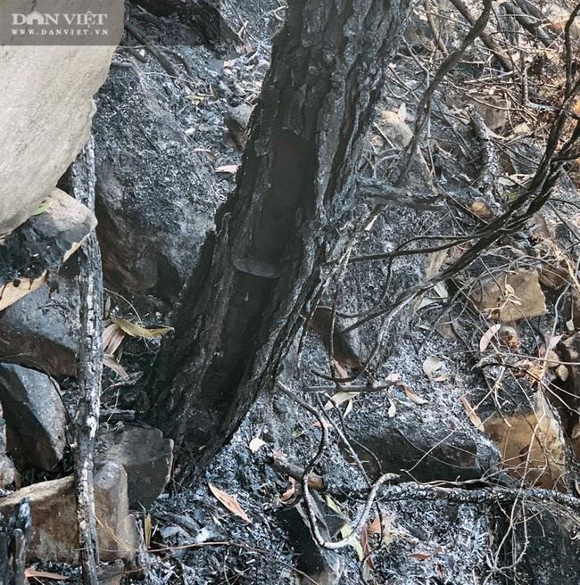 Kiểm lâm Nghệ An và cuộc chiến giữ rừng - Ảnh 4.