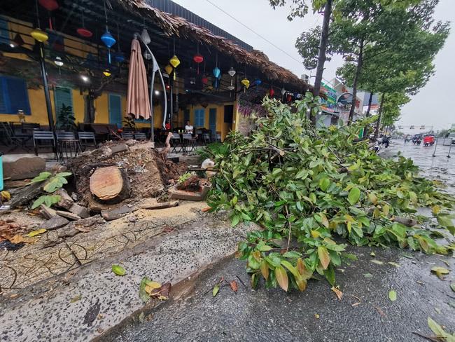 Gió mạnh trong cơn mưa lớn ở Cần Thơ: Tốc mái 6 căn nhà, nhiều cây xanh đổ ngã - Ảnh 2.