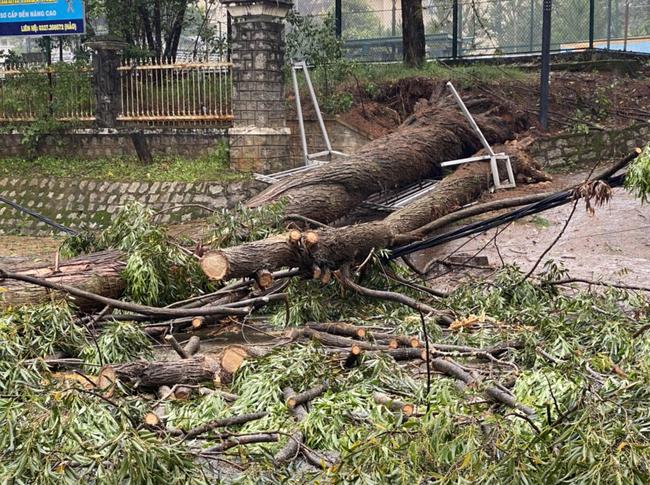 Đà Lạt: Nhiều cây xanh gãy đổ do ảnh hưởng cơn bão số 2 - Ảnh 3.