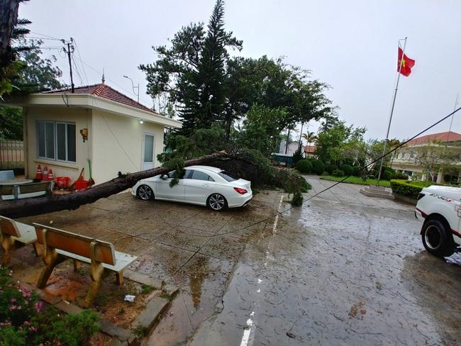 Đà Lạt: Nhiều cây xanh gãy đổ do ảnh hưởng cơn bão số 2 - Ảnh 4.