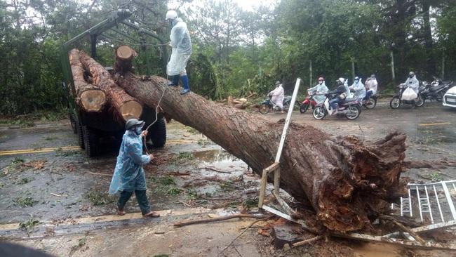 Đà Lạt: Nhiều cây xanh gãy đổ do ảnh hưởng cơn bão số 2 - Ảnh 2.