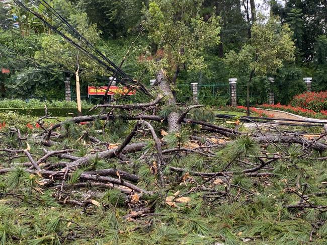 Đà Lạt: Nhiều cây xanh gãy đổ do ảnh hưởng cơn bão số 2 - Ảnh 7.