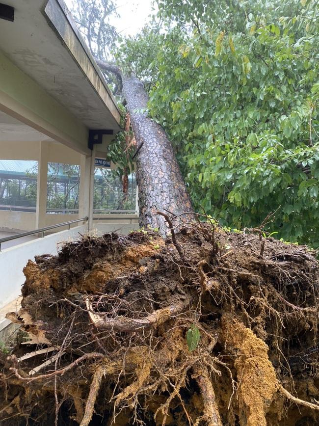 Đà Lạt: Nhiều cây xanh gãy đổ do ảnh hưởng cơn bão số 2 - Ảnh 1.