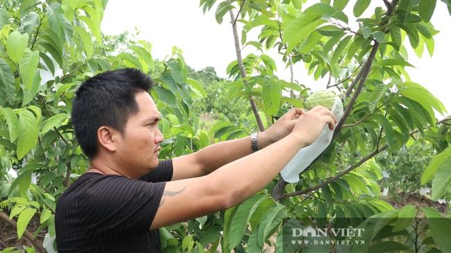 Trồng 300 cây na Thái, bán 70 ngàn một ký vẫn không đủ hàng - Ảnh 8.