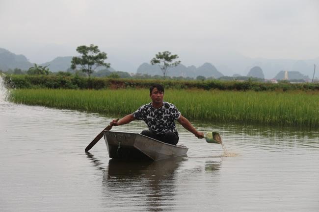 """""""Bày kế"""" giúp nông dân có thu nhập cao từ mô hình cá - lúa - Ảnh 1."""