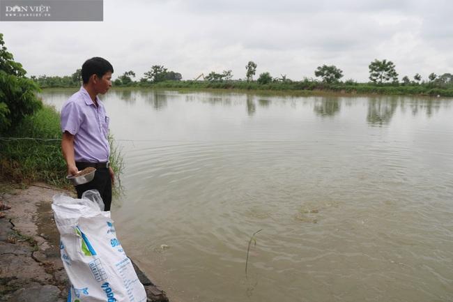 Thả cá trong ruộng lúa, nông dân lãi trăm triệu đồng/vụ  - Ảnh 1.