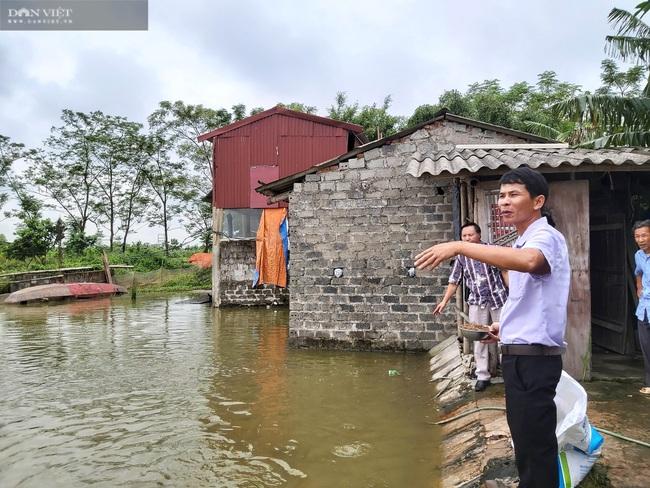 Thả cá trong ruộng lúa, nông dân lãi trăm triệu đồng/vụ  - Ảnh 2.