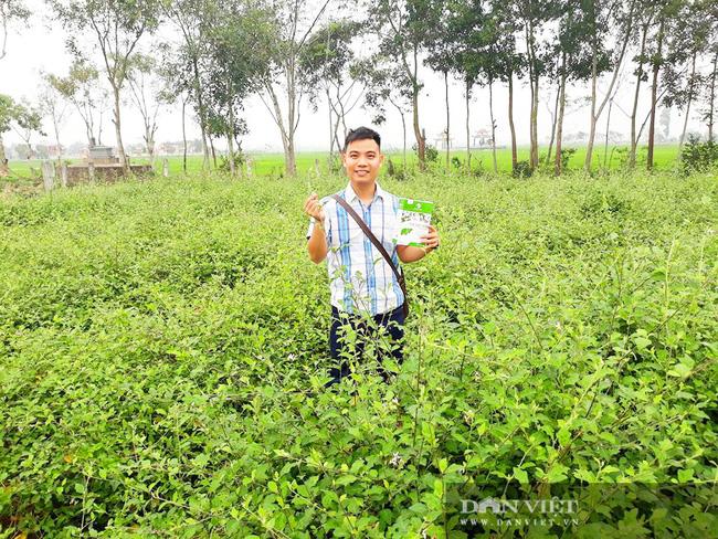 """Vợ chồng trẻ """"treo"""" bằng Cao đẳng về quê trồng cây có gai, thu lãi hàng trăm triệu - Ảnh 1."""