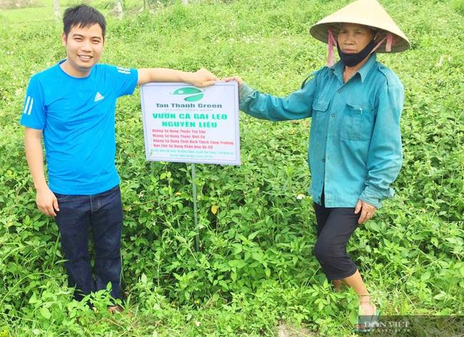 """Vợ chồng trẻ """"treo"""" bằng Cao đẳng về quê trồng cây có gai, thu lãi hàng trăm triệu - Ảnh 2."""