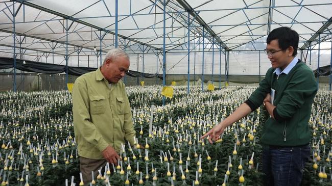 Chuyện lão nông mua 5.000m2 đất trị giá 75 cây vàng để trồng hoa cúc - Ảnh 5.