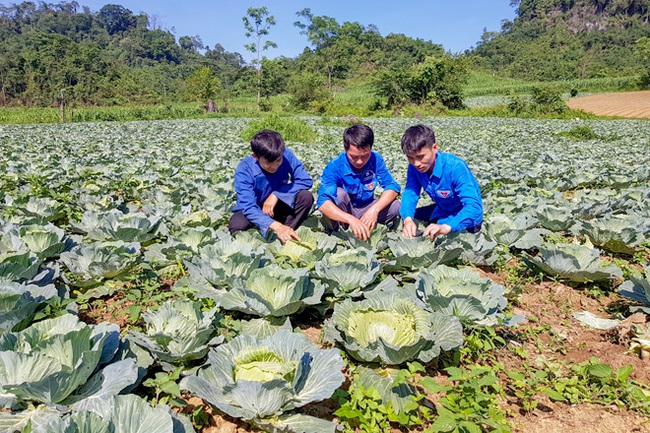 """Nông dân """"lên đời"""" từ trồng rau sạch trái vụ  - Ảnh 1."""