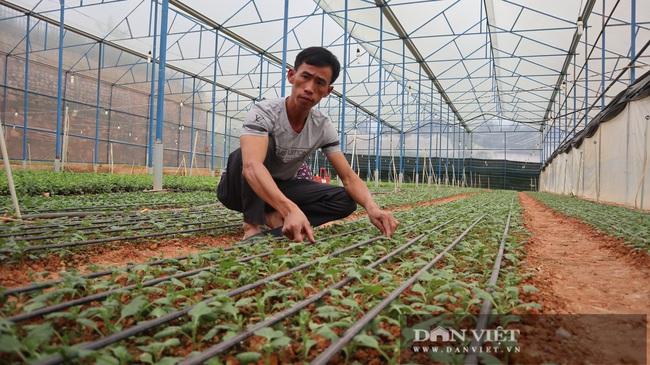 Chuyện lão nông mua 5.000m2 đất trị giá 75 cây vàng để trồng hoa cúc - Ảnh 3.