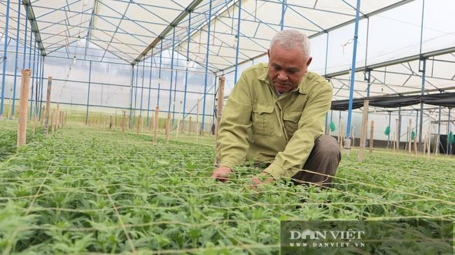 Chuyện lão nông mua 5.000m2 đất trị giá 75 cây vàng để trồng hoa cúc - Ảnh 2.
