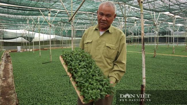 Chuyện lão nông mua 5.000m2 đất trị giá 75 cây vàng để trồng hoa cúc - Ảnh 6.