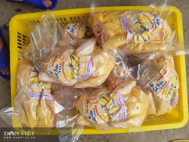 Quảng Ninh: Nuôi con lông đẹp như công, thịt ngon miễn chê, cho thu nhập khủng, mỗi năm bán hàng chục tấn vẫn thiếu hàng. - Ảnh 24.