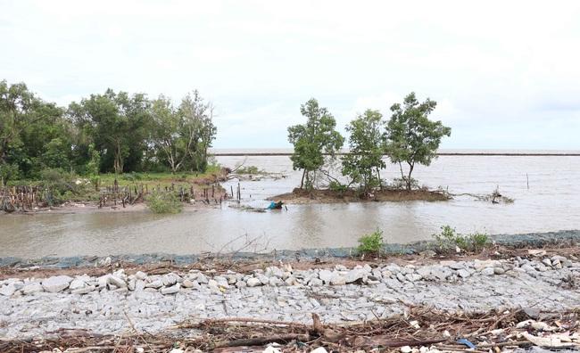 Hàng ngàn mét đê biển Tây ở Cà Mau bị sạt lở đặc biệt nguy hiểm - Ảnh 1.