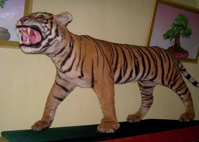"""Từ loạt bài """"Xâm nhập đường dây buôn bán hổ xuyên quốc gia"""": Tổng kiểm tra tất cả cơ sở nuôi nhốt hổ  - Ảnh 5."""