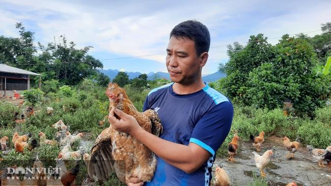 Quảng Ninh: Nuôi con lông đẹp như công, thịt ngon miễn chê, cho thu nhập khủng, mỗi năm bán hàng chục tấn vẫn thiếu hàng. - Ảnh 4.