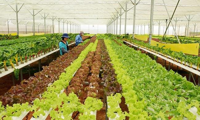 TP.Hồ Chí Minh: Hơn 840 tỷ đồng phát triển nông nghiệp an toàn - Ảnh 1.