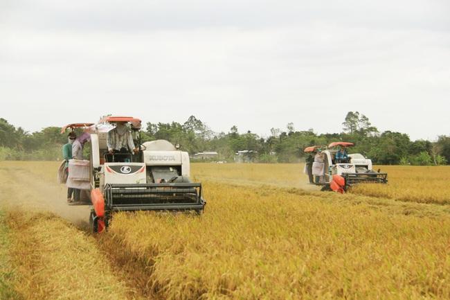 Hạt gạo Việt - từ cứu đói đến thu tỷ đô - Ảnh 1.