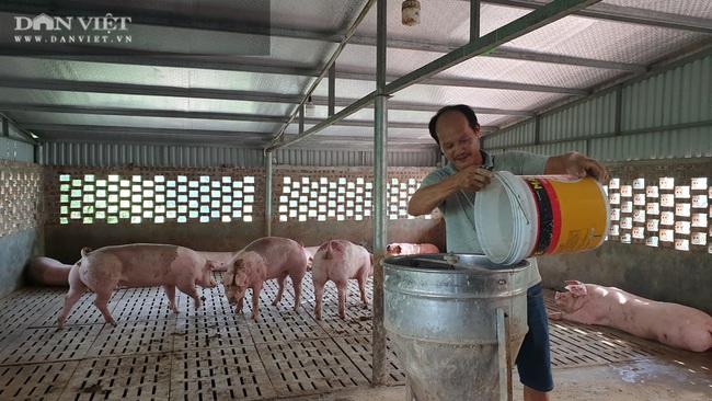 Nam Định: Cho lợn ăn sâm, thảo quả… nghe nhạc trữ tình, có bao nhiêu nhà giàu cũng khuân hết  - Ảnh 3.