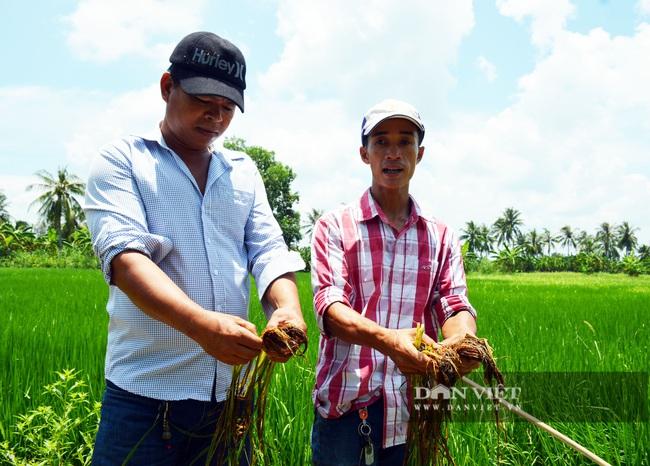 Vụ phun thuốc diệt cỏ, diệt cả... lúa: Tiến hành làm đối chứng nếu mẫu thuốc đạt chất lượng - Ảnh 1.