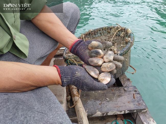 Ngao, hầu ở Vân Đồn mất giá, chủ nuôi đi câu cá để kiếm ăn - Ảnh 7.