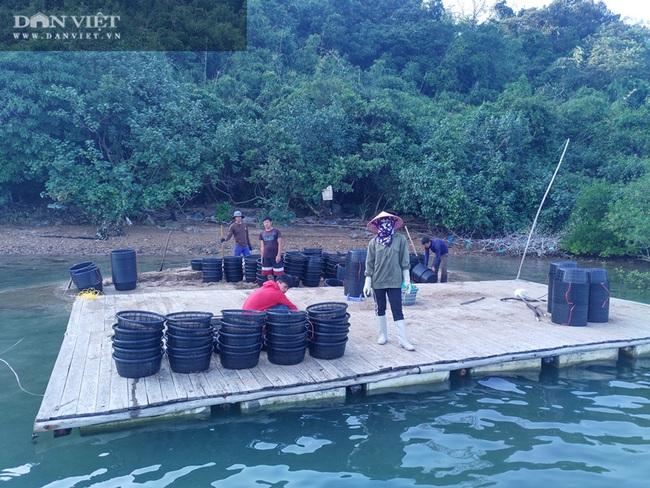 Ngao, hầu ở Vân Đồn mất giá, chủ nuôi đi câu cá để kiếm ăn - Ảnh 6.