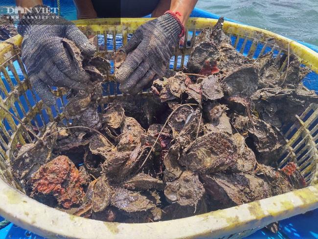 Ngao, hầu ở Vân Đồn mất giá, chủ nuôi đi câu cá để kiếm ăn - Ảnh 10.