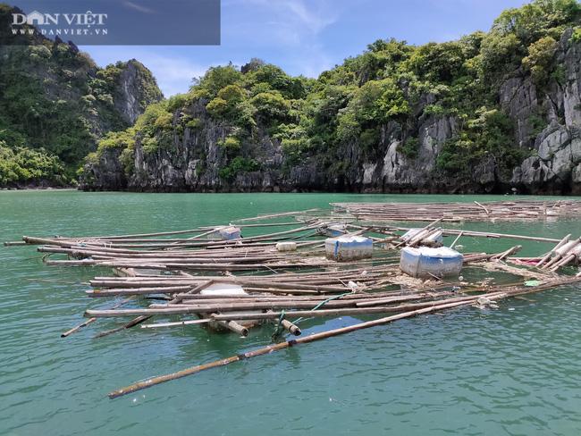 Ngao, hầu ở Vân Đồn mất giá, chủ nuôi đi câu cá để kiếm ăn - Ảnh 5.