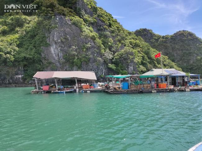 Ngao, hầu ở Vân Đồn mất giá, chủ nuôi đi câu cá để kiếm ăn - Ảnh 1.