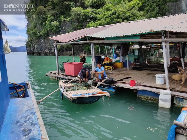Ngao, hầu ở Vân Đồn mất giá, chủ nuôi đi câu cá để kiếm ăn - Ảnh 3.