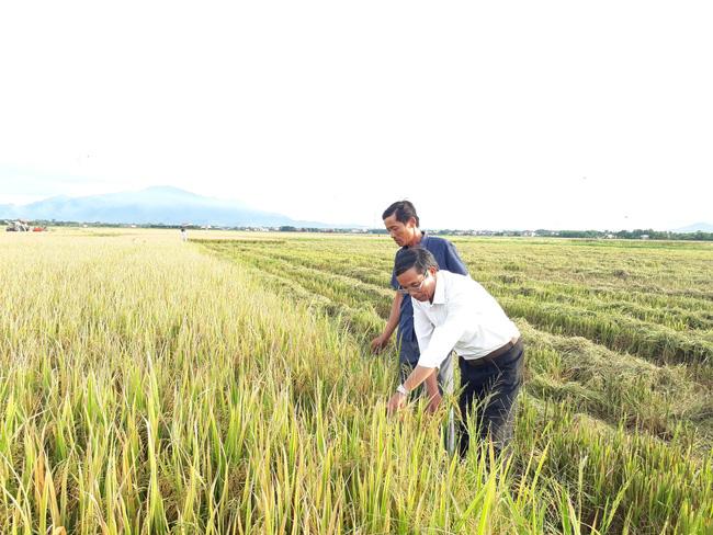 Hạt gạo Việt - từ cứu đói đến thu tỷ đô - Ảnh 2.