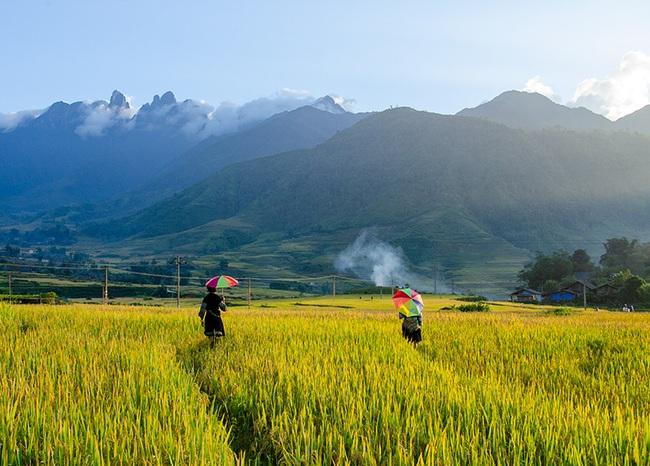 Lào Cai: Không ngờ chân núi Ngũ Chỉ Sơn lại có ruộng bậc thang đẹp mê mẩn thế này  - Ảnh 3.