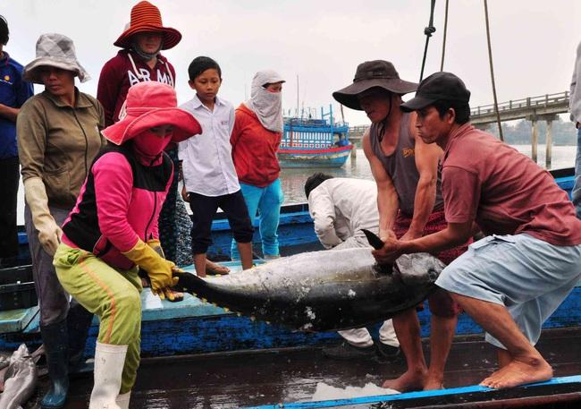 """Gỡ """"thẻ vàng"""" của EU: Mạnh tay xử lý tàu cá vi phạm vùng biển nước ngoài - Ảnh 2."""