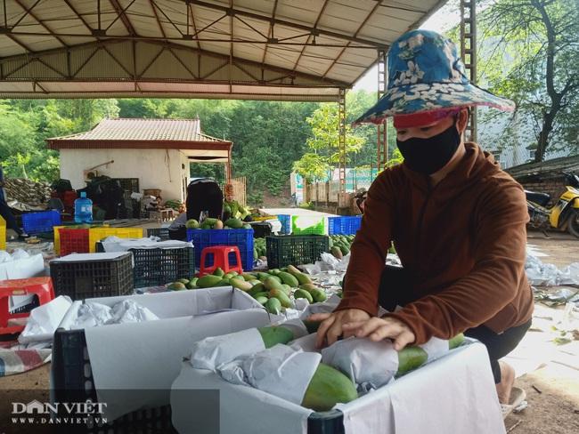 Cây ăn quả lan rộng,Yên Châu nhiều triệu phú  - Ảnh 3.