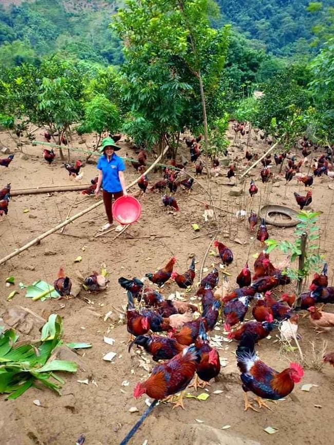 Giá gia cầm hôm nay 29/8: Giá vịt thịt miền Nam tụt thêm, thị trường gà thịt dần khởi sắc - Ảnh 1.
