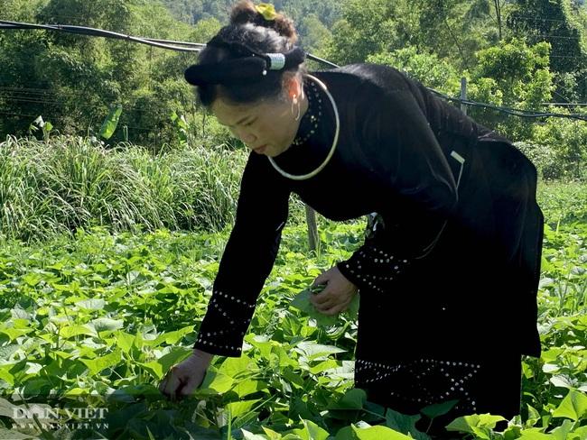 Bỏ đại học về làm nông dân, mở khách sạn kết hợp chăn nuôi, thu hơn 70 triệu đồng mỗi tháng  - Ảnh 3.