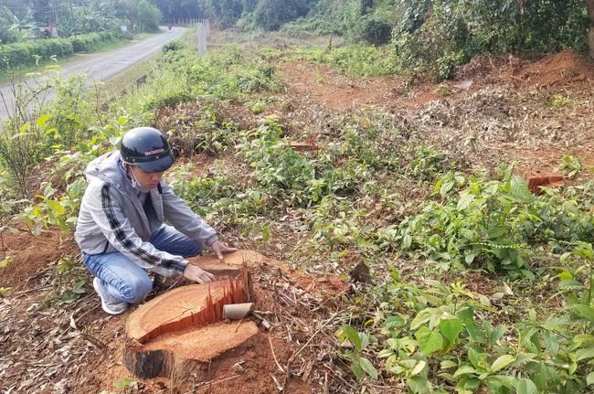 Phá rừng, một công ty du lịch ở Quảng Trị bị phạt tiền - Ảnh 1.