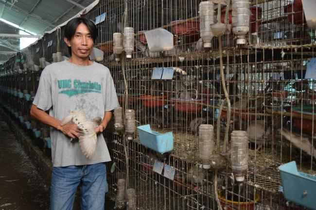 Nuôi loài chim gì mà một nông dân tỉnh Long An có thu 60 triệu đồng/tháng?