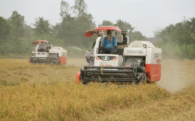 Xuất khẩu gạo sôi động, tăng làm lúa thu đông - Ảnh 1.