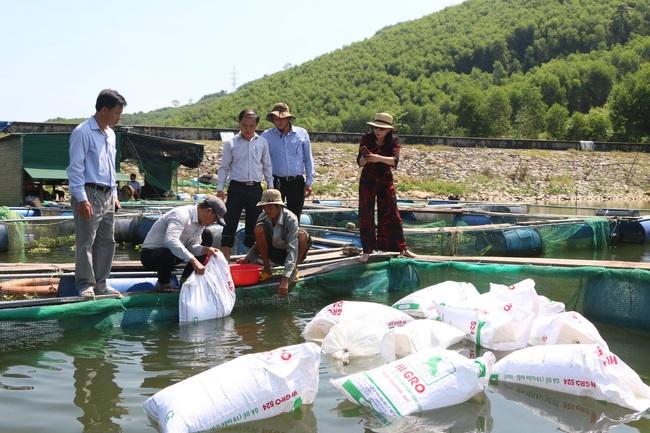 Trợ sức nuôi cá lồng bè trên hồ thủy lợi - Ảnh 1.