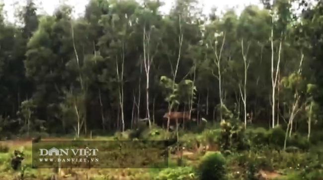 Đắk Nông: Voi rừng rượt đuổi công nhân, phá phách hoa màu của người dân - Ảnh 1.