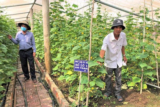 Sản xuất theo chuỗi, nông dân Phú Thiện tăng nhanh thu nhập - Ảnh 1.