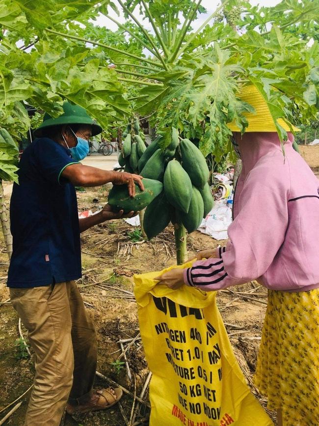 Quảng Ngãi: Nông dân tặng cả vườn rau, quả và hàng ngàn kg rau tươi, cá, thịt… cho khu cách ly dịch Covid-19 - Ảnh 1.