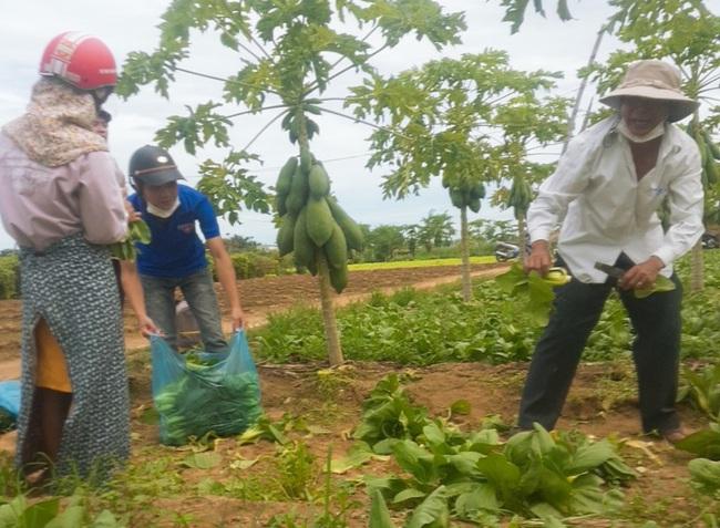 Quảng Ngãi: Nông dân tặng cả vườn rau, quả và hàng ngàn kg rau tươi, cá, thịt… cho khu cách ly dịch Covid-19 - Ảnh 2.