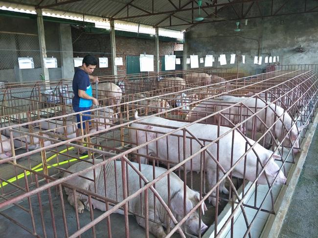 Không dễ đưa chăn nuôi nông hộ khỏi nội đô - Ảnh 1.
