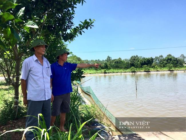 Hà Nội: Anh nông dân nuôi toàn con cá to bự chuẩn VietGAP, lái buôn đến tận ao mua hết - Ảnh 5.