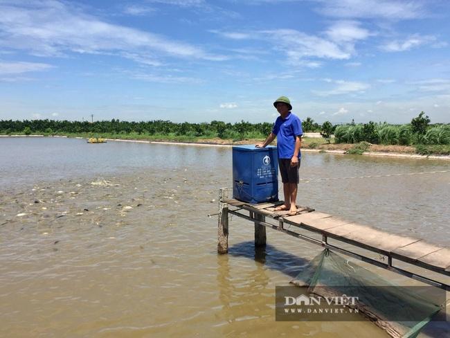 Hà Nội: Anh nông dân nuôi toàn con cá to bự chuẩn VietGAP, lái buôn đến tận ao mua hết - Ảnh 3.